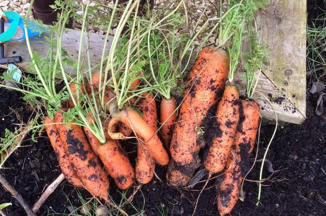 Carrot surprise! image